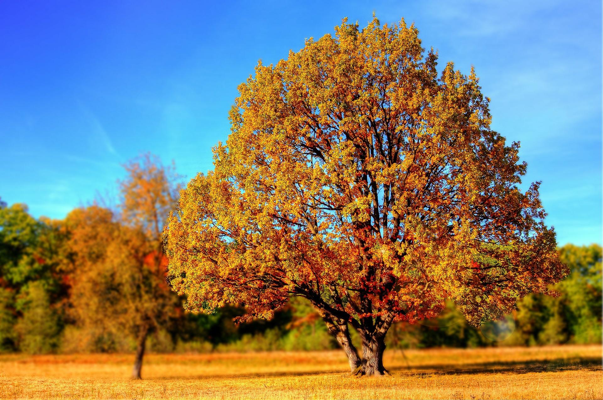 Bunter Herbstbaum